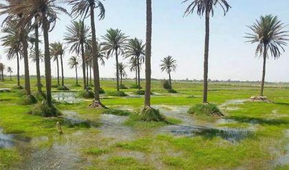 لمواجهة التصحر .. الزراعة العراقية تعلن حاجة البلاد لـ14 مليار و200 مليون شجرة