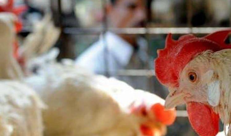 الزراعة: تشخيص إصابة بانفلونزا الطيور في نينوى
