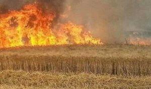 الدفاع المدني: تسجيل 210 حوادث حرق للمحاصيل والحكومة تتجه للتعويض