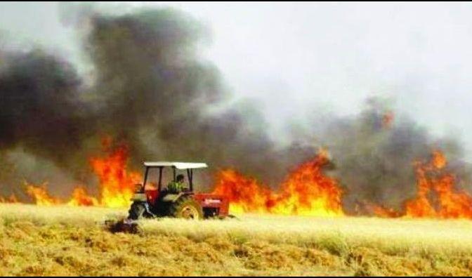 الزراعة تكشف أسباب حرائق الحقول ونسبتها من المساحة المزروعة