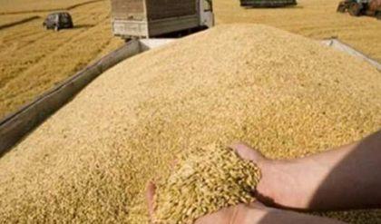 زراعة نينوى تعلن موعد استلام الحنطة من المزارعين