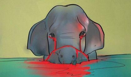 تطور جديد في قصة أنثى الفيل التي هزت الهند والعالم
