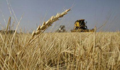 نينوى: حصاد الحنطة شارف على الانتهاء وعلى الحكومة اتخاذ خطوات عاجلة
