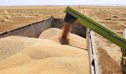 نينوى تسوق 750 الف طن من محصولي الحنطة والشعير