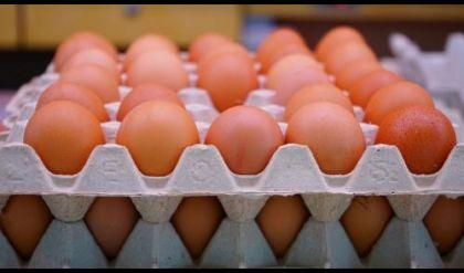 وزارة الزراعة تدعو لتشديد أجراءات منع استيراد البيض