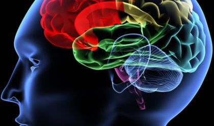 الفقر يغير الحالة الطبيعية للمخ