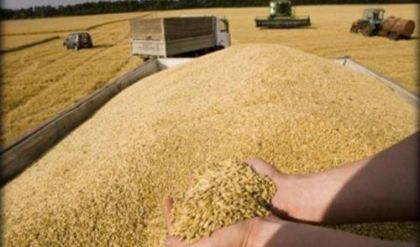 التجارة تعلن استلامها اكثر من 4 ملايين طن من الحنطة