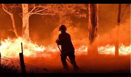 ارتفاع حصيلة ضحايا حرائق الغابات في أستراليا الى 12 قتيلا
