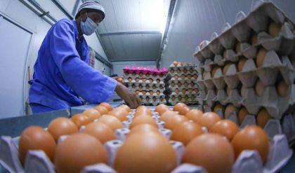 الزراعة العراقية تفرض سعراً لا يتجاوز الـ6 آلاف دينار لطبقة البيض