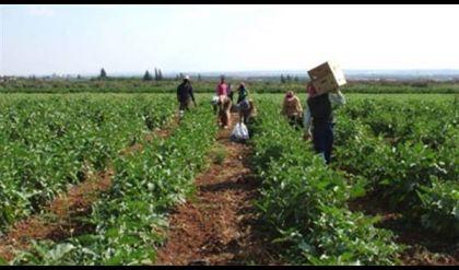 الزراعة النيابية تطالب بتنفيذ قرار مجلس الوزراء بشأن مستحقات الفلاحين