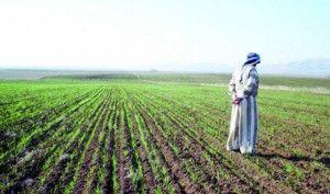 الزراعة: الأمطار غيّرت الخطة الشتوية وضاعفت المساحات في عموم المحافظات