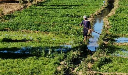 استثناء الفلاحين وملاكات وزارتي التجارة والزراعة من حظر التجوال في العراق