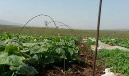 زراعة نينوى: تنفيذ حملة مجانية لمكافحة القوارض