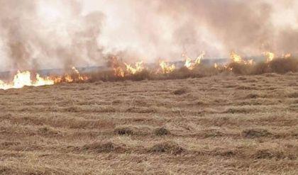 نائب: حرائق الموصل تشكل 10% من حاجة البلاد للحنطة