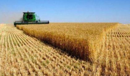 المركزي للاحصاء: المساحة المزروعة بمحصول الحنطة بلغت 3154 دونم لسنة 2018